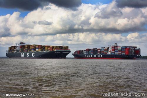 Cargo Ship MSC Luciana IMO 9398383 by Sosa